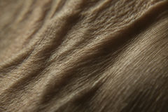 Human skin. Detail of the human hand skin Royalty Free Stock Photography