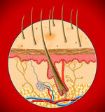 Human Skin inside structure. In red background by illustration Royalty Free Stock Photography