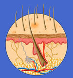 Human Skin inside structure. In blue background by illustration Stock Image