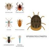 Human skin parasites vector housing pests insects disease parasitic bug macro animal bite dangerous infection medicine. Pest illustration. Infectious sucking Stock Photo