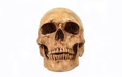 Human skul. Skull model on isolated white background Stock Photo