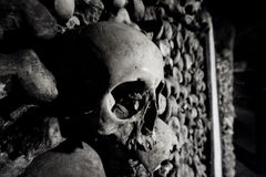Human Skull. A human skull in a wall of bones, in the catacombs of Paris Stock Images