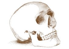 Human skull,  Royalty Free Stock Images