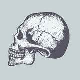Human Skull Royalty Free Stock Photography