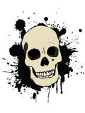 Human skull Royalty Free Stock Photo
