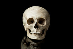 Human skull. Human skull on the black background Stock Images