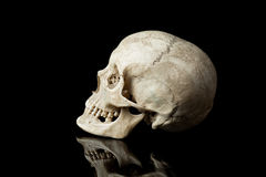 Human skull. royalty free stock photo
