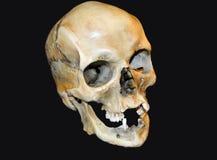 Human Skull. Replica of human skull on black background Royalty Free Stock Photo