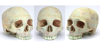 Human Skull. Shown from the side, on white background. Good for topics on medicine, anthropology, forensics, the human brain, or biology Stock Images