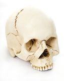 Human skull. On white background Royalty Free Stock Images