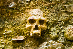 Human skull. In a stone wall Stock Image
