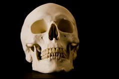 Human skull. With high contrast light over a black background Stock Image