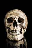 Human skull Royalty Free Stock Photos