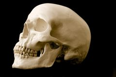Human skull. Still life of a human skull over a black background Stock Photography