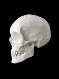 Human skull. Isolated on black background stock images