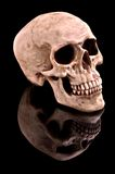 Human Skull. On black background with reflection royalty free stock photo