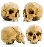 Human skull. Four angels of human skull isolated on white royalty free stock images