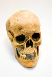 Human Skull. An old skull of a human being Stock Photos