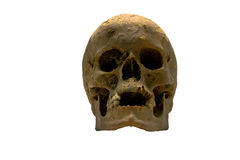 Human Skull. An old skull of a human being Stock Image