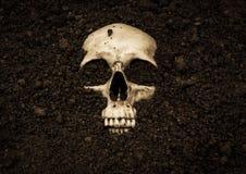 Free Human Skull Stock Photo - 79583850