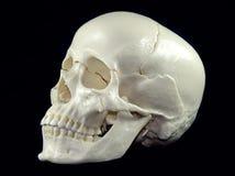 Human Skull. Isolated  Black Background Royalty Free Stock Photo