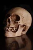 Human skull. A still life with an human skull royalty free stock photo