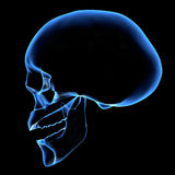 HUMAN SKULL. X-ray of a head Stock Photos