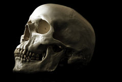 Human skull. Against black background Stock Photo