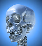 Human skull background Royalty Free Stock Images