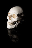 Human skull on a black background Royalty Free Stock Photography