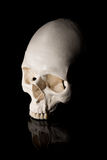 Human skull on a black background Royalty Free Stock Images