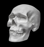 Human skull on black background Royalty Free Stock Photo