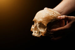 Human skull on a black background. flare effect. Real skull is  on black background Royalty Free Stock Images