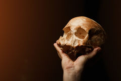 Human skull on a black background. flare effect. Real skull is  on black background Royalty Free Stock Photos