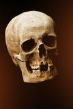 Human skull on a black background. flare effect Stock Images