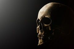 Human skull on a black background. flare effect. Real skull is  on black background Stock Images
