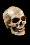 Human skull on black background Royalty Free Stock Image