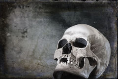 Human Skull on Black Grunge Background Royalty Free Stock Image