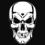 Human skull. Black and white human skull with a lower jaw Stock Photo