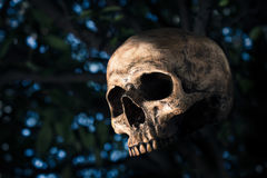 Human skull with the bokeh Royalty Free Stock Photos