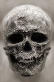 Human skull bone. Human anatomy - ancient people skull bone royalty free stock image