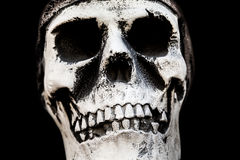 Human skull bone Royalty Free Stock Photos
