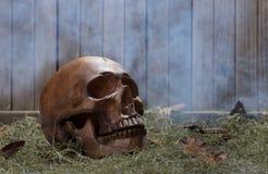 Human Skull Bone Stock Photos