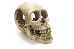 Human skull bones side view ISOLATED. Old Human Skull isolated against white background. Anatomy illustration. Medical image. Sign of death. Symbol of dying royalty free stock images
