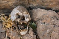 Human Skull at burial site stock photos