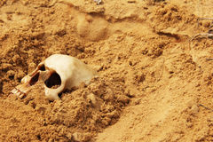 Human skull. Buried in the sand Royalty Free Stock Photo