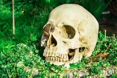 Human skull in cemetery Stock Image