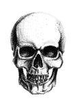 Human skull. Circle drawing.  on white background Royalty Free Stock Image