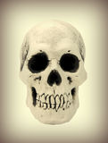 Human skull close up image Stock Photography