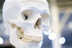 Human skull closeup stock photography